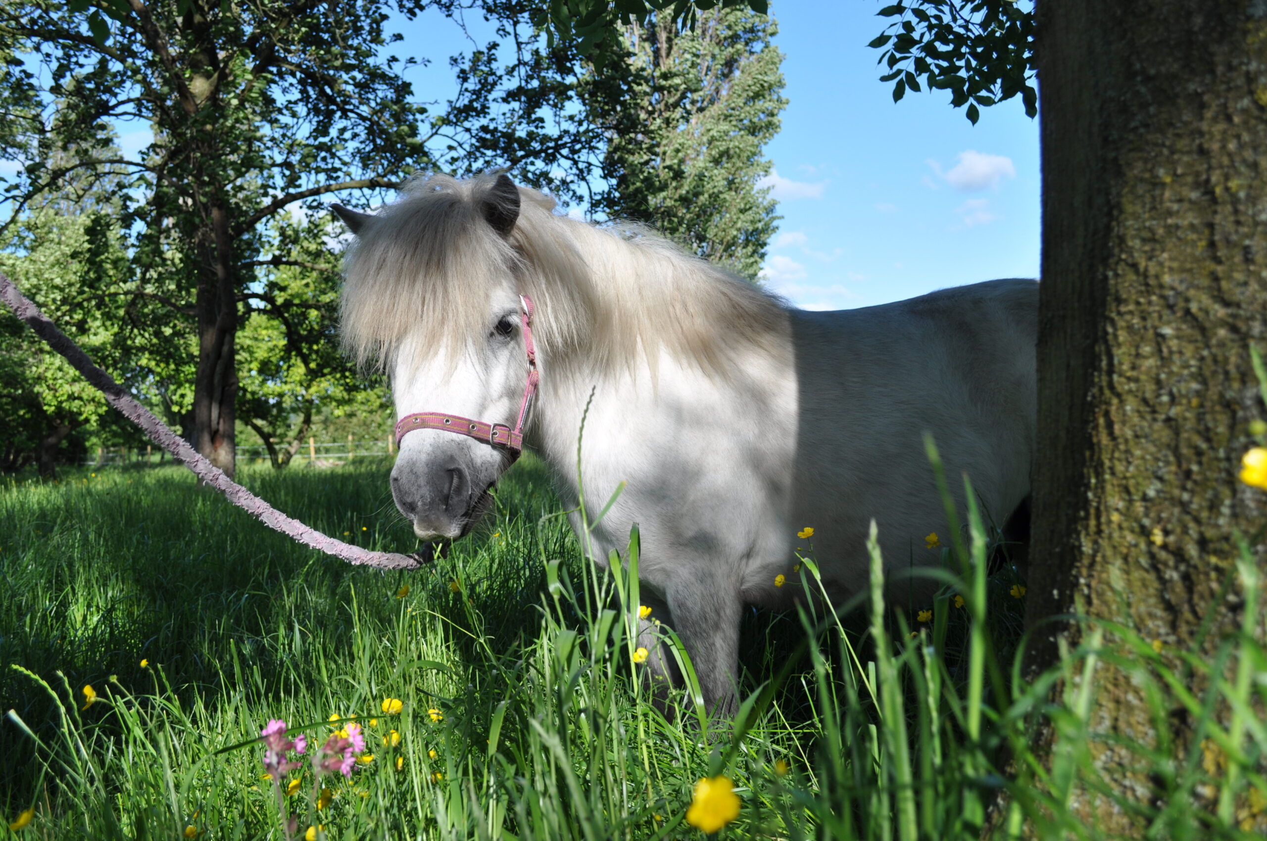 Pony Tales Club Skitles